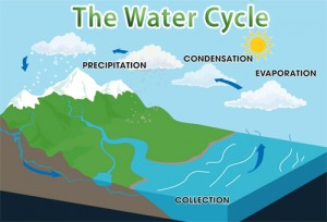Kids-Science-Fun-Facts-All-about-the-Water-Cycle-Diagram-of-the-Water-Cycle-image