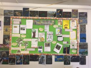 Rainforests by 5th and 6th class
